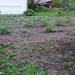"""neighbor's """"garden"""""""